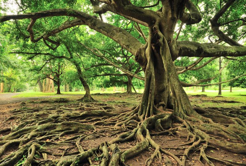 stocktree